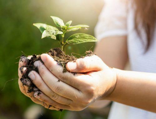 Las energías limpias ayudan a mantener un medio ambiente saludable